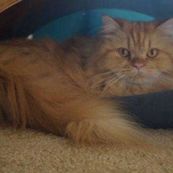 QuickSnap Cat Hammock