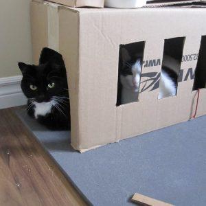 Cardboard cat garage