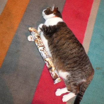 Kitty Kick Stix